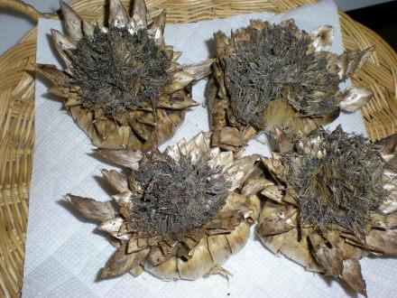 アーティチヨークの種