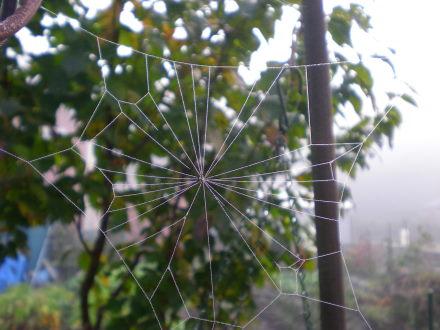 クモの巣1115