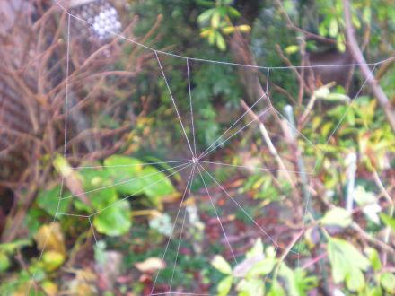 クモの巣1115の1