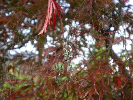 クモの巣1115の5