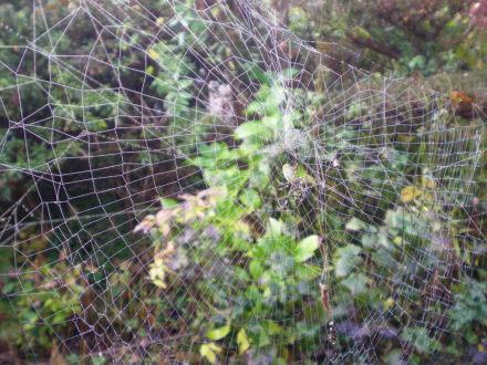 クモの巣1115の6