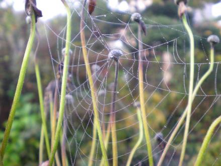 クモの巣115の3