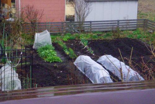 菜園331