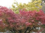 08/11/20 紅葉の雪景色
