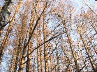 12月16日林の中から見る空