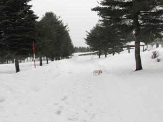 1月19日雪