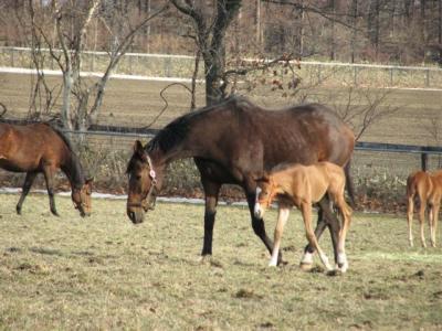 2009.3.21racing horse