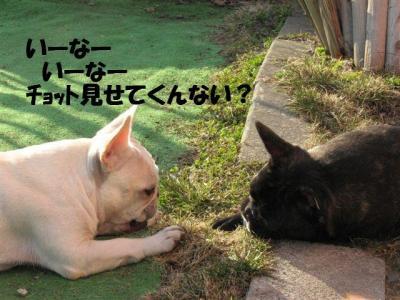 4月3日姫と小姫