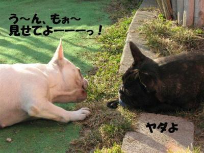 4月3日姫&小姫2