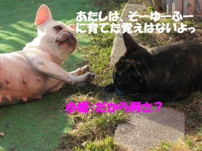 4月3日姫&小姫3