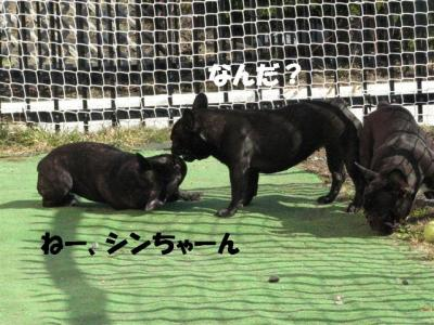 4月7日シン&小姫3
