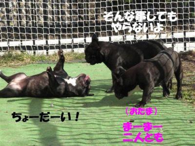 4月7日シン&小姫4