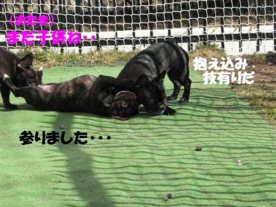 4月7日シン&小姫5