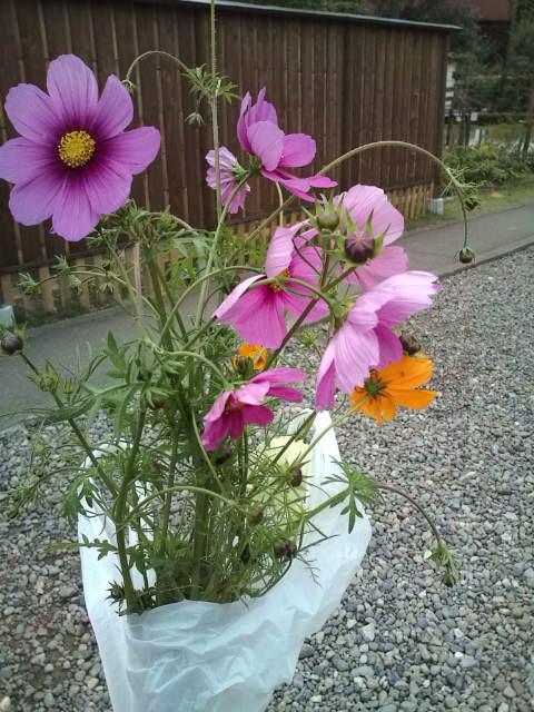 お花摘みは100円