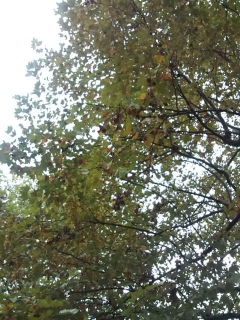 栗の木もありました