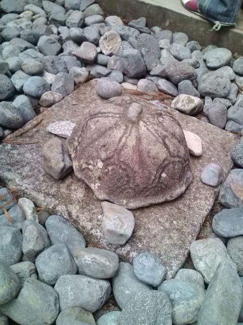 石が亀の形☆