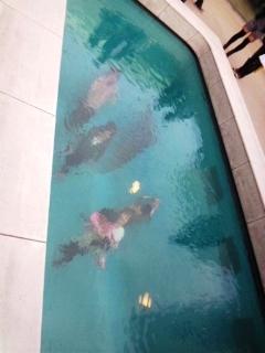プールの中からこんにちは