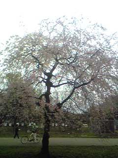 20090405_2