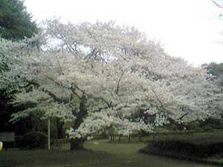 20090405_3
