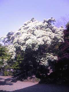 20090502_2.jpg