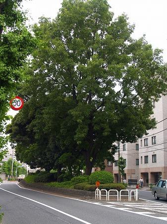 ichirizuka61.jpg