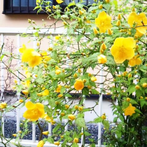 fc2blog_20120417224231dad.jpg