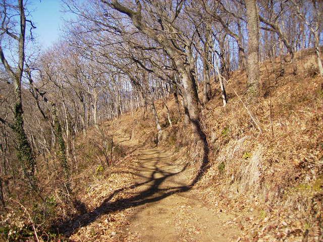 冬木の周回遊歩道48
