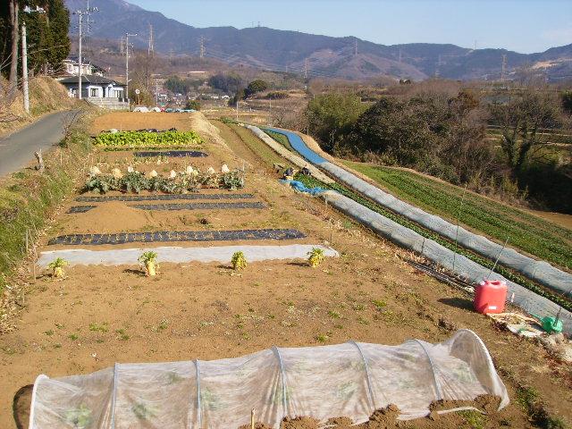 冬の畑50