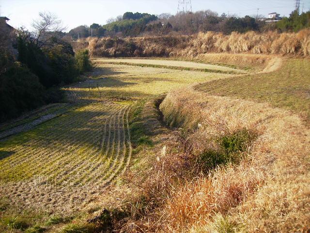 冬の田んぼ29
