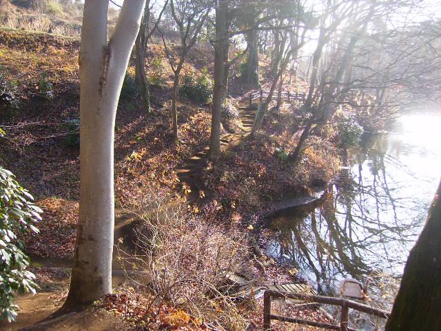 冬木の遊歩道13