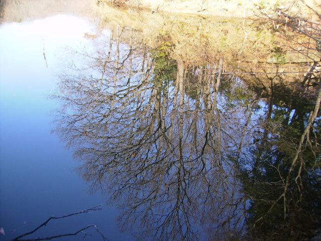 水面の冬木50