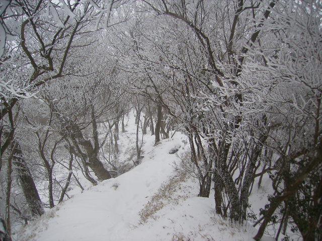 霧氷の尾根道67