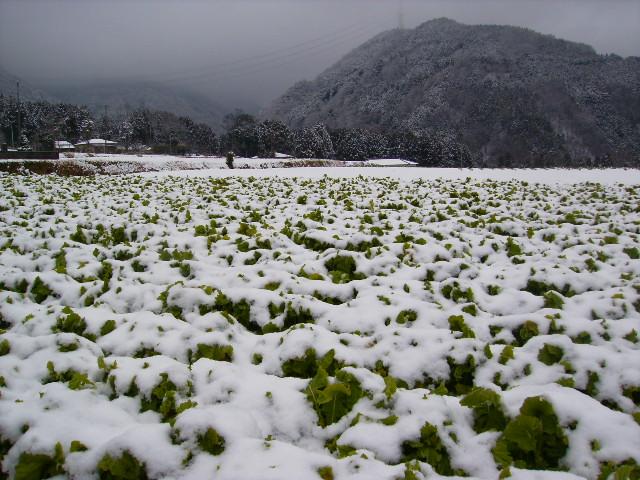 雪の畑110