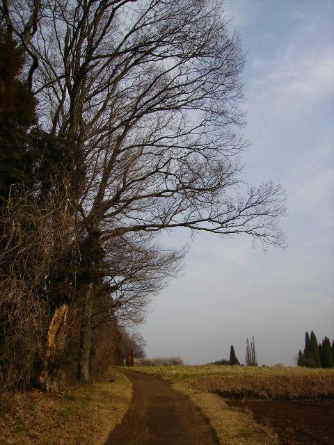 初春の農道19
