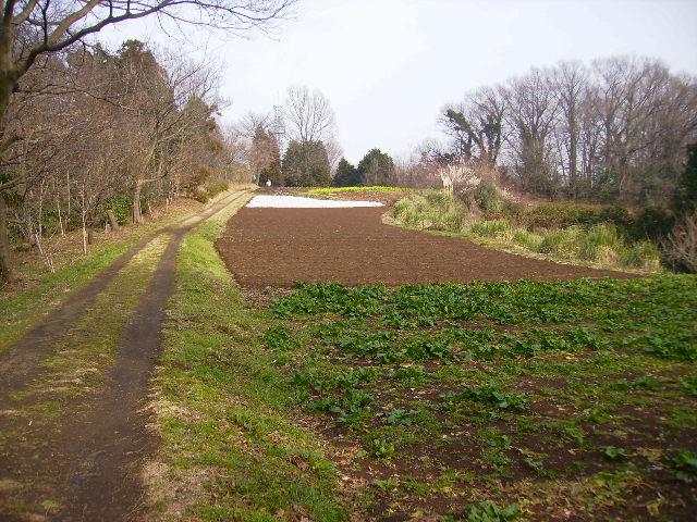 初春の農道27