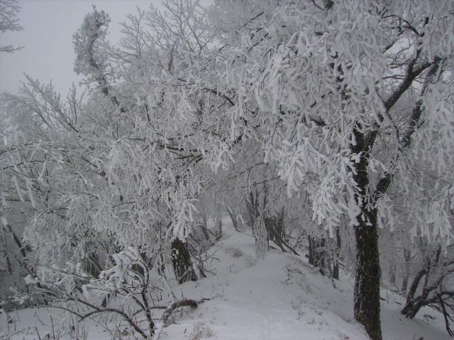 霧氷の尾根道129