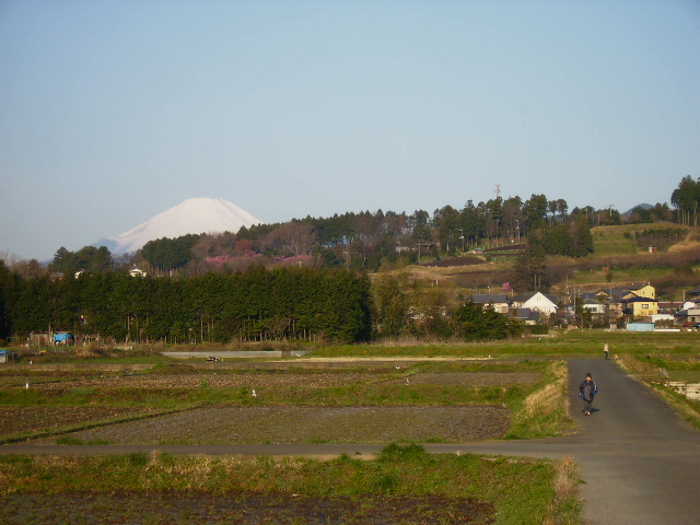 白富士と散歩15