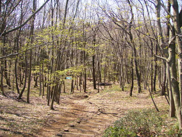 新緑の林135