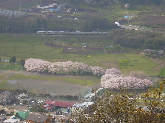 桜と電車34