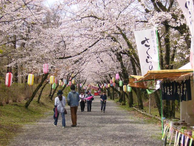 馬場道の桜59