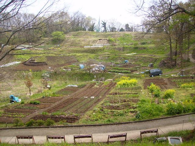 春の畑163