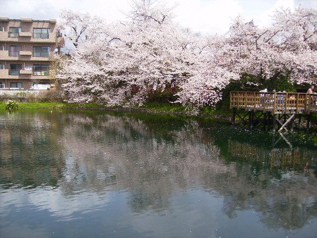 水面の桜110