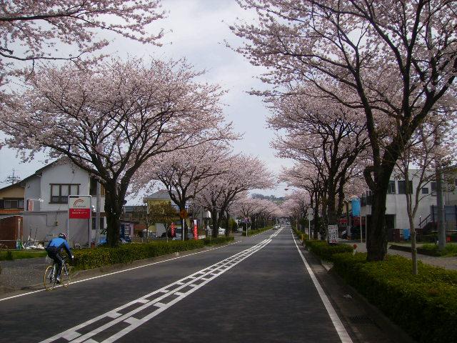桜並木168