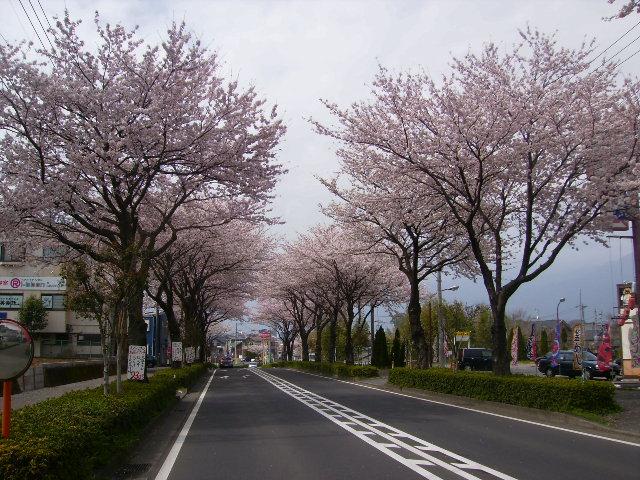 桜並木169