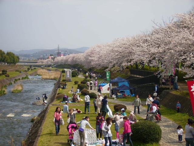 川辺の桜183