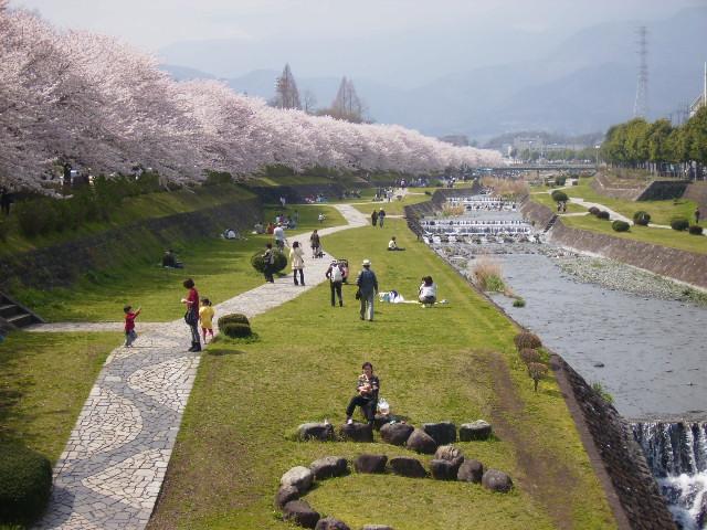 川辺の桜173