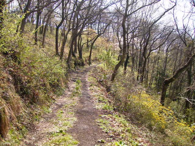 春の周遊の山道134