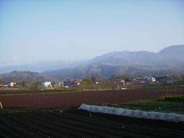 春の畑15