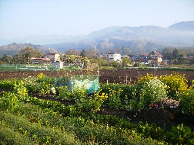 春の畑12