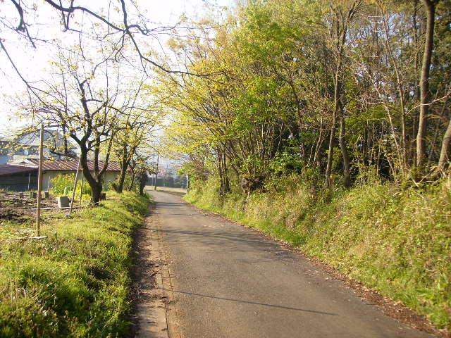 若葉の道75